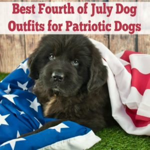 fourth of july outfits for dogs